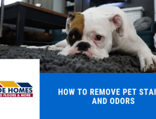 How to Remove Pet Stains and Odors